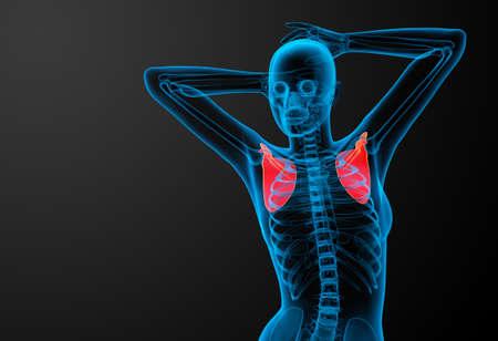 3d render medical illustration of the scapula bone - front view