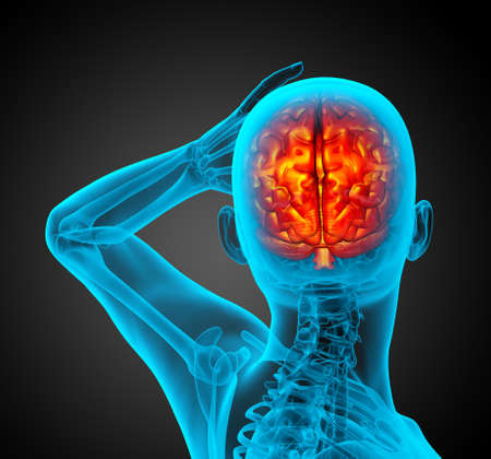 3d render medical illustration of the human brain - back view