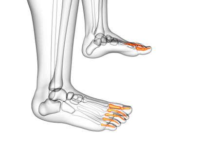 3d render medical illustration of the phalanges foot - side view