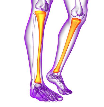 3d render medical illustration of the tibia bone - side view