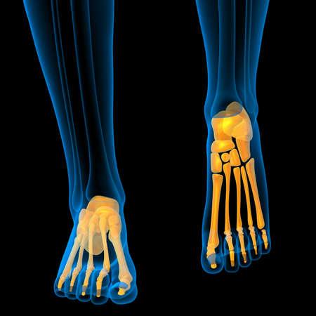 3d render medical illustration of the foot bone - front view