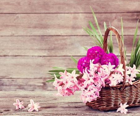hyacinth: spring flowers on wooden background
