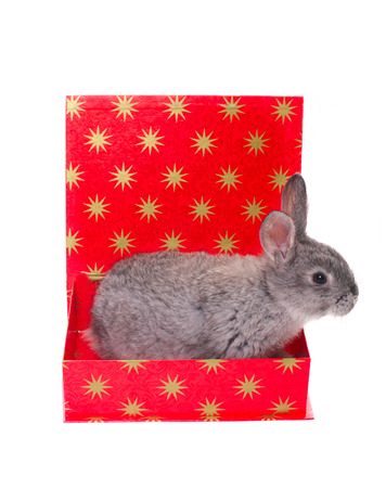 rabbit in box isolated on white
