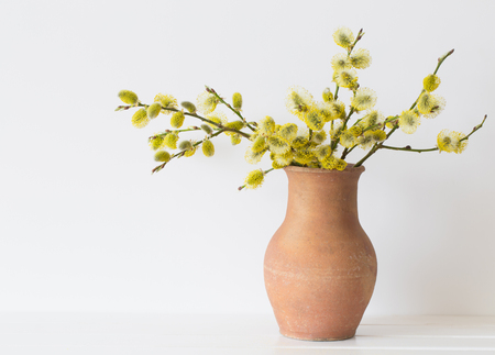 Branches Of The Pussy Willow With Flowering Bud In Vase With Stock