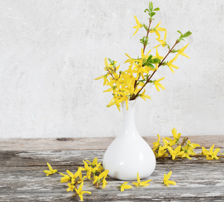 yellow spring flowers in vase