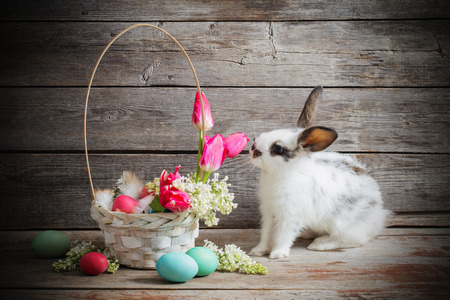sweet grasses: rabbit with Easter eggs on wooden background Stock Photo