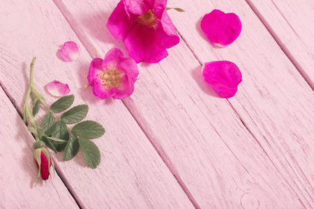table scraps: pink roses on wooden table Stock Photo