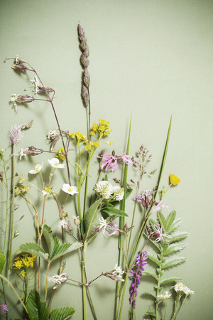 yarrow: plants on green background Stock Photo