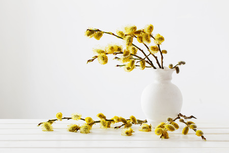 Branches of the pussy willow with flowering bud in vase with water on white background