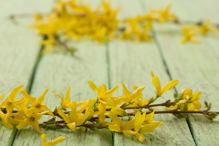 Spring yellow flowers on old green wooden background