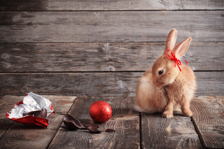 rabbit with chocolate eggs on wooden background Stock Photo
