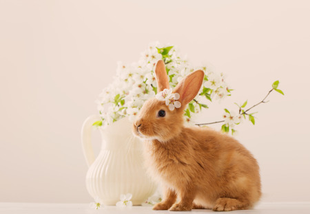 흰색 배경에 부활절 빨간 계란 토끼