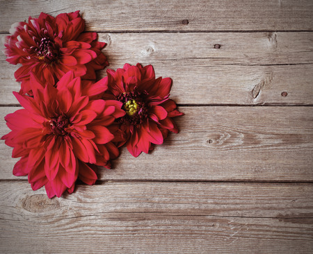 dahlia: dahlia on wooden background