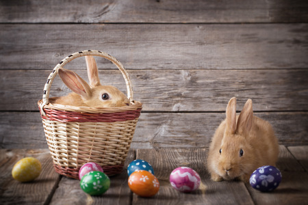 sweet grasses: rabbits with Easter eggs on wooden background