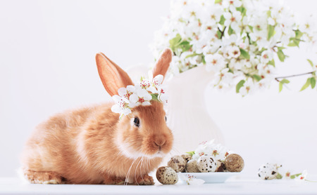 Red rabbit with Easter eggs on white background