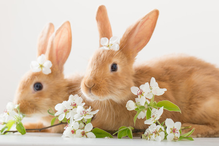 red rabbits on white background