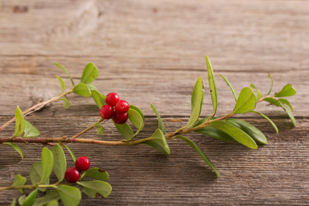 cowberry on wooden background