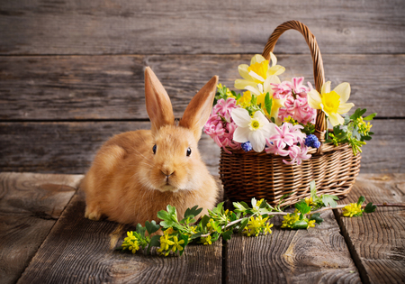 little rabbit with spring flowers