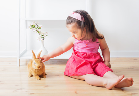 lop lop rabbit white: little girl with rabbit indoor