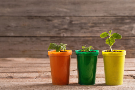 Young plants in pots on wooden background Stock Photo