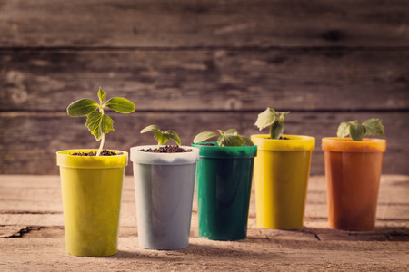 Young plants in pots on wooden background Stok Fotoğraf