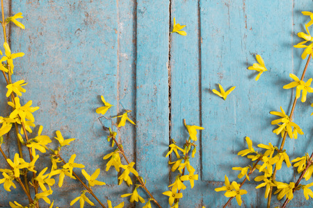 Spring yellow flowers on old blue wooden background Stock Photo