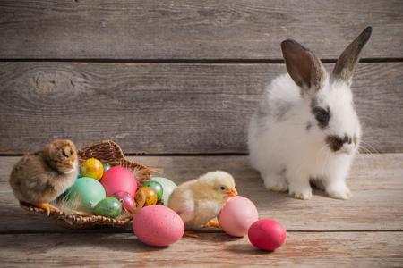 Huhn und Kaninchen mit Ostereiern auf Holzuntergrund Standard-Bild - 73926175