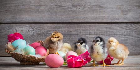 Huhn mit Ostereier auf Holzuntergrund Standard-Bild - 73926170