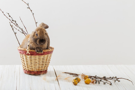 rabbit with Easter eggs on white background