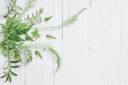 yarrow: plant over white wood background Stock Photo
