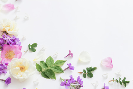 summer flowers on white background 免版税图像