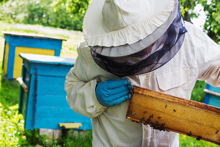 beekeeper with bees outdoor Stock Photo