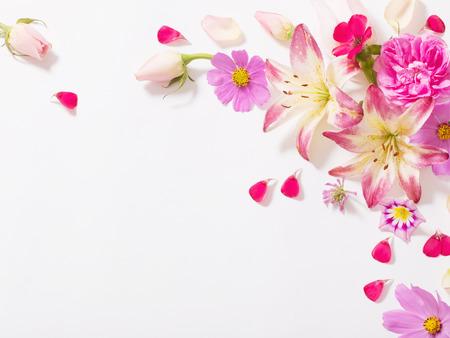 summer flowers on white background Stock Photo