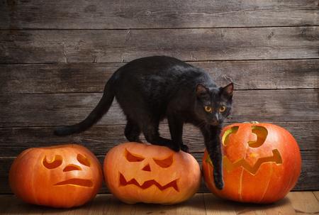 black cat with orange halloween pumpkin on wooden background