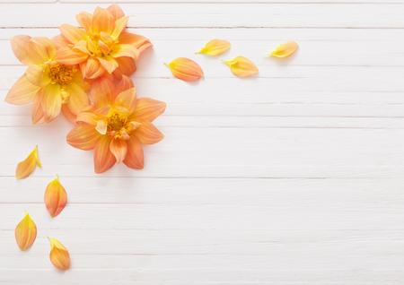 Sfondo con fiori dahlias Archivio Fotografico - 86327987