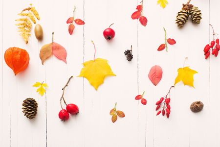 red berriaes and  autumn leaves on white wooden background