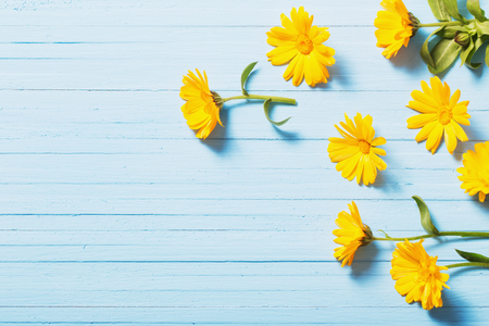 calendula flowers on blue wooden background 免版税图像