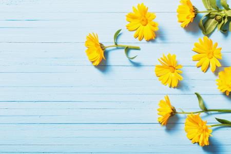 calendula flowers on blue wooden background Foto de archivo
