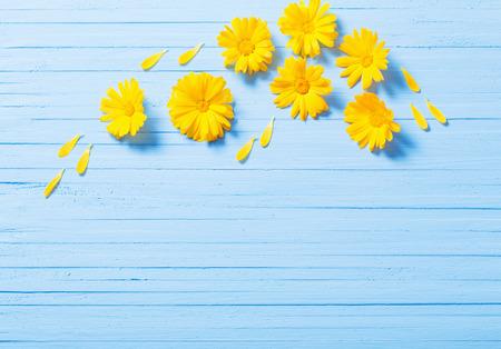 calendula flowers on blue wooden background Stock Photo