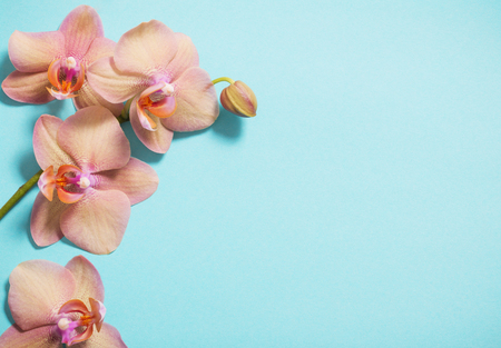 orchids on blue background 스톡 콘텐츠