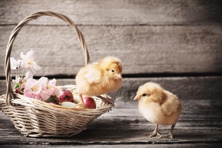 chicken with Easter eggs on wooden background Standard-Bild - 96642533