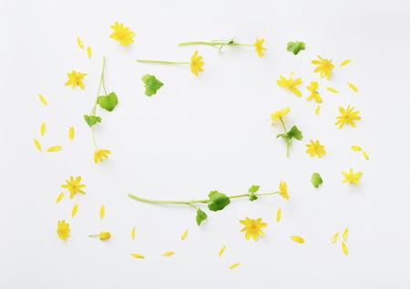yellow flowers on white background Standard-Bild