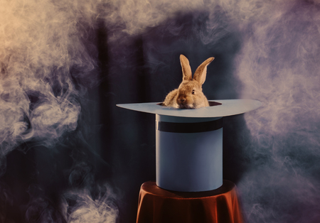 konijn in hoed op blauwe achtergrond Stockfoto