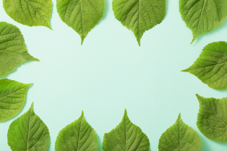 green leaves on paper background