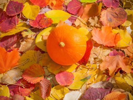 orange pumpkin on background of autumn leaves 免版税图像