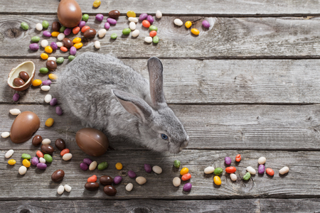 Easter rabbit with chocolate eggs on old wooden background Stockfoto