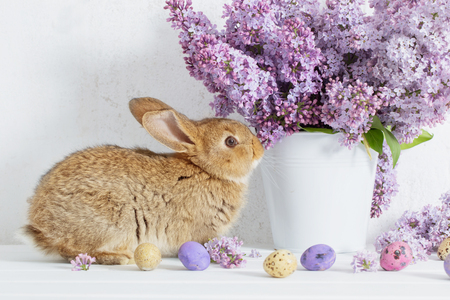Easter rabbit with lilac in vase on white background