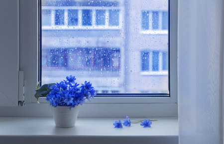 blue spring flowers on windowsill