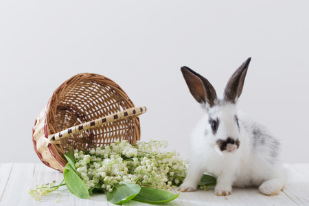 rabbits with spring flowers on white background Standard-Bild