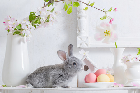 bunny with easter eggs on white background Stockfoto